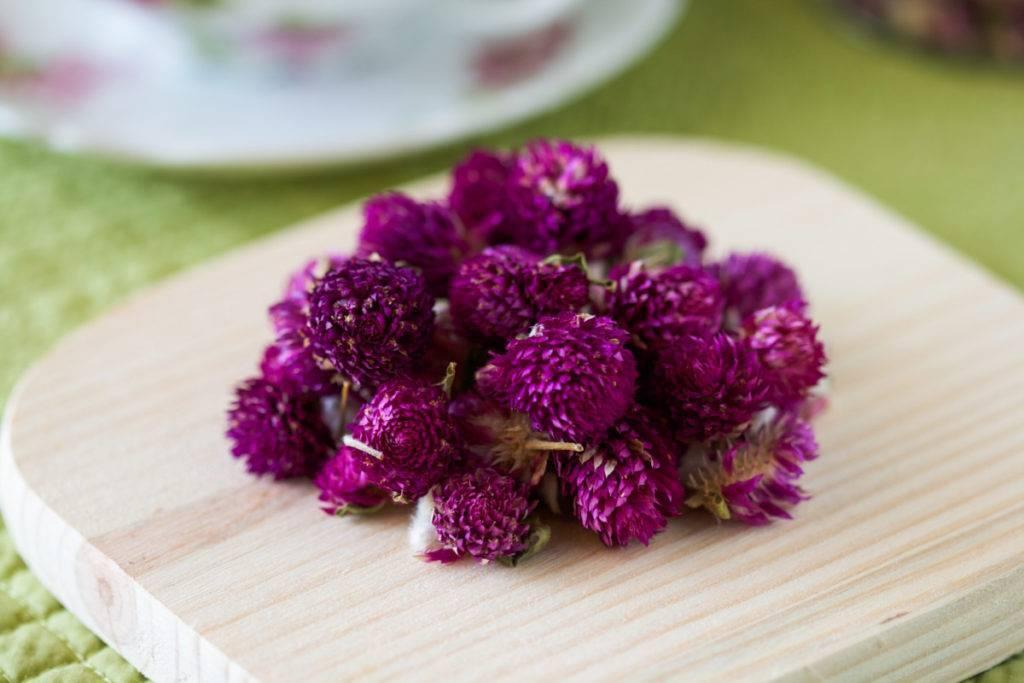 Амарант растение – лечебные свойства, польза и вред