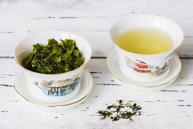 Чай кудин: полезные свойства (польза) и противопоказания (вред) - советы врачей как заваривать чай кудин
