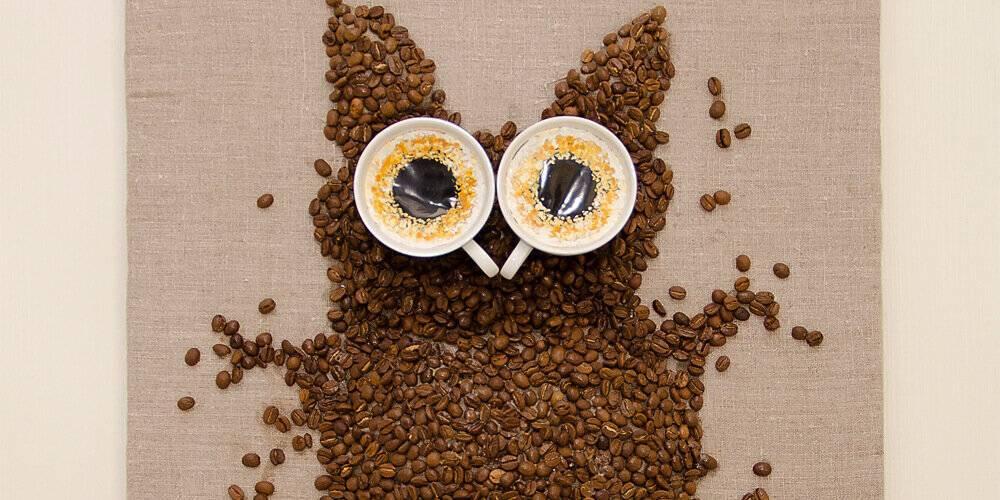 Как кофе может довести вас до истерики: личный опыт редактора vogue | vogue russia
